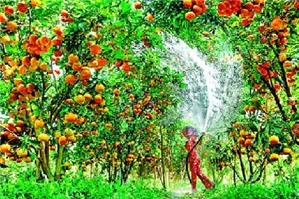 Phương pháp kế toán chi phí sản xuất kinh doanh dở dang ngành nông nghiệp theo Thông tư 133