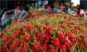 Kế toán Chi phí sản xuất, kinh doanh dở dang trong ngành nông nghiệp - Tài khoản 154 (Bài 27)